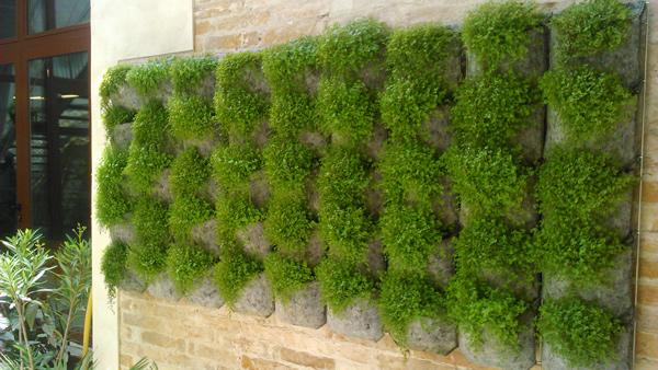 El riego de un jard n vertical vertiflor blog de vertiflor for Que es un jardin vertical