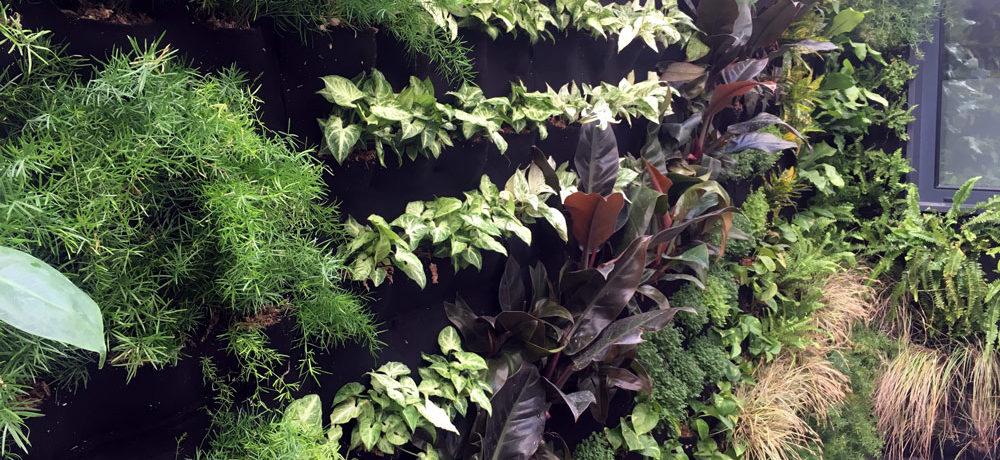 Jardín vertical huelva