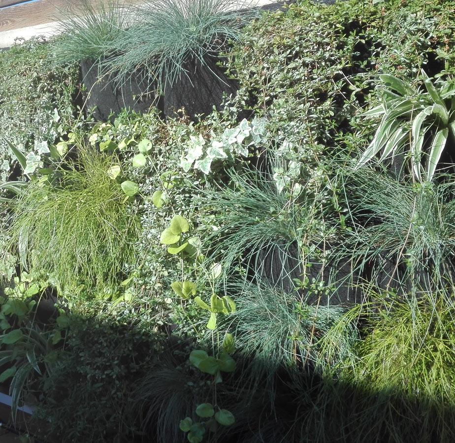 jardí vertical Badalona